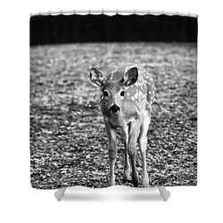 Bambi In Black And White Shower Curtain by Sebastian Musial