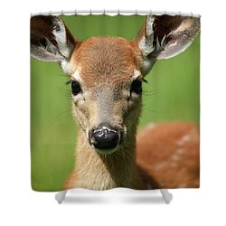 Bambi Shower Curtain by Karol Livote