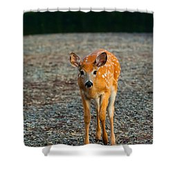 Bambi Shower Curtain by Sebastian Musial