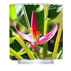 Banana Bloom Shower Curtain by Cheryl Young