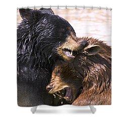 Bears In Water Shower Curtain by Carson Ganci