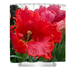 Beautiful From Inside And Out - Parrot Tulips In Philadelphia Shower Curtain by Mother Nature