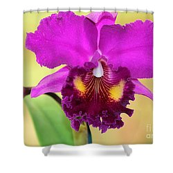 Beautiful Hot Pink Orchid Shower Curtain by Sabrina L Ryan