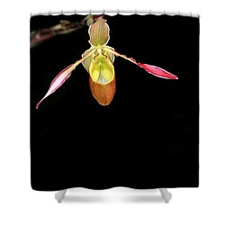 Beautiful Lady Slipper Orchid Shower Curtain by Sabrina L Ryan