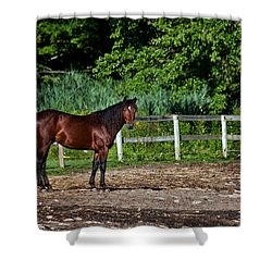 Beauty Of A Horse Shower Curtain by Karol Livote
