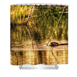 Beaver Eating Late Evening Shower Curtain by Dan Friend