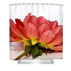 Beneath Me Shower Curtain by Susan Smith