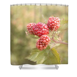 Berry Good Shower Curtain by Kim Hojnacki