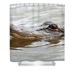 Big Eyes Baby Gator Shower Curtain by Carol Groenen