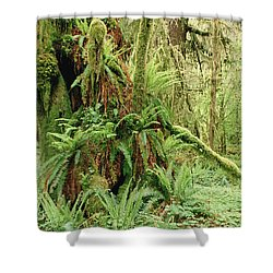 Bigleaf Maple Acer Macrophyllum Trees Shower Curtain by Gerry Ellis