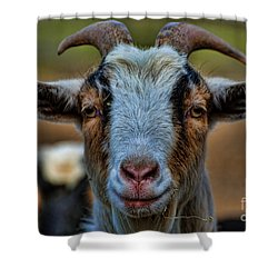 Billy Goat Shower Curtain by Paul Ward