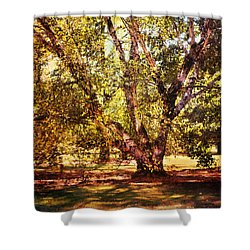 Birch Tree Shower Curtain by Jai Johnson