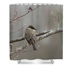 Bird - Eastern Phoebe - Very Contented Shower Curtain by Travis Truelove