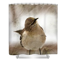 Bird In A Bag Shower Curtain by Skip Willits