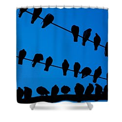 Birds On A Wire Shower Curtain by Karol Livote