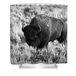 Bison In Black And White Shower Curtain by Sebastian Musial
