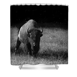 Bison Shower Curtain by Ralf Kaiser