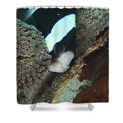 Black And White Anemone Fish Looking Shower Curtain by Mathieu Meur