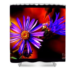 Blooming Asters Shower Curtain by Susanne Still