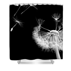 Blown Away Shower Curtain by Rhonda Barrett