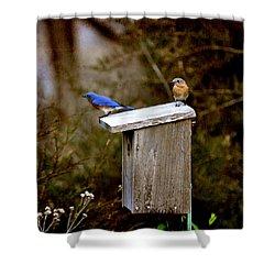 Blue Birds Shower Curtain by Todd Hostetter