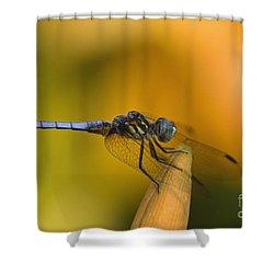 Blue Dasher - D007665 Shower Curtain by Daniel Dempster