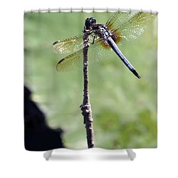 Blue Dasher Dragonfly Dancer Shower Curtain by Sabrina L Ryan