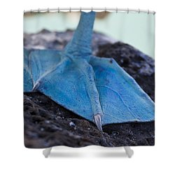 Blue Footed Booby Shower Curtain by Dave Fleetham