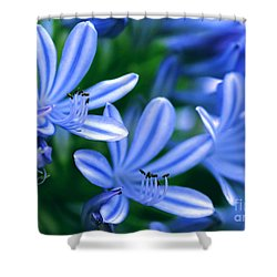 Blue Lily Of The Nile Shower Curtain by Sabrina L Ryan