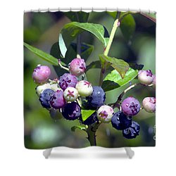 Blueberry Bunch With Raindrops Shower Curtain by Sharon Talson