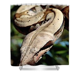 Boa Constrictor Boa Constrictor Shower Curtain by Claus Meyer
