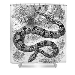 Boa Constrictor Shower Curtain by Granger