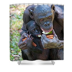 Bonobo 3 Shower Curtain by Kenneth Albin