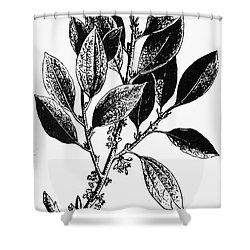 Botany: Coca Shrub Shower Curtain by Granger
