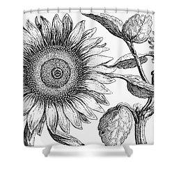 Botany: Sunflower Shower Curtain by Granger