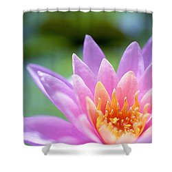 Bright Pink Water Lily II Shower Curtain by Kicka Witte