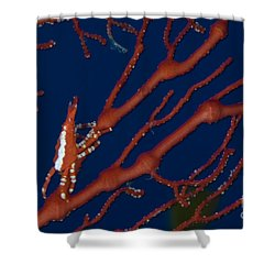 Bright Red Crab On Fan Coral, Papua New Shower Curtain by Steve Jones