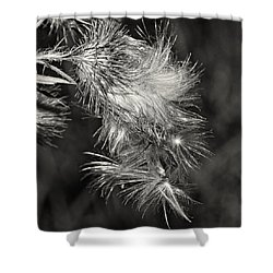 Bull Thistle Monochrome Shower Curtain by Steve Harrington