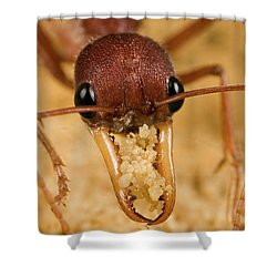 Bulldog Ant Myrmecia Gulosa Worker Shower Curtain by Mark Moffett