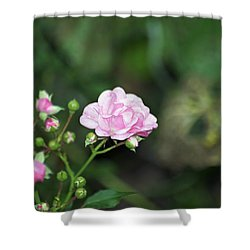 By Any Other Name Shower Curtain by Elaine Mikkelstrup