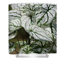 Caladium Named White Christmas Shower Curtain by J McCombie