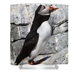 Call Of The Puffin Shower Curtain by Bruce J Robinson