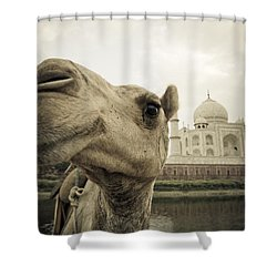 Camel In Front Of The Yamuna River And Shower Curtain by David DuChemin