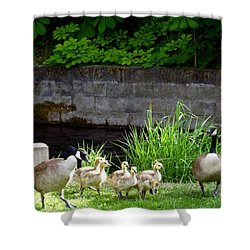 Canada Geese With Goslings Shower Curtain by Will Borden