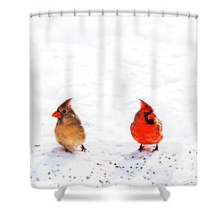 Cardinal Couple II Shower Curtain by Tamyra Ayles