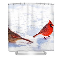Cardinal Couple Shower Curtain by Tamyra Ayles