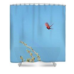 Cardinal In Full Flight Digital Art Shower Curtain by Thomas Woolworth