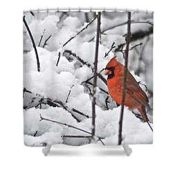 Cardinal Male 3669 Shower Curtain by Michael Peychich