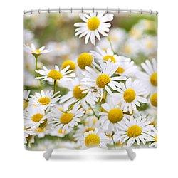 Chamomile Flowers Shower Curtain by Elena Elisseeva