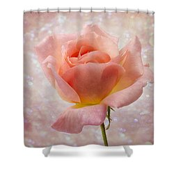 Champagne Rose. Shower Curtain by Clare Bambers